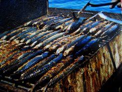 Fish Picnic - Cjelodnevni izlet